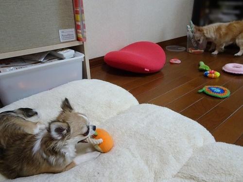 柚子 杏子