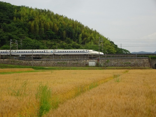 麦畑 新幹線