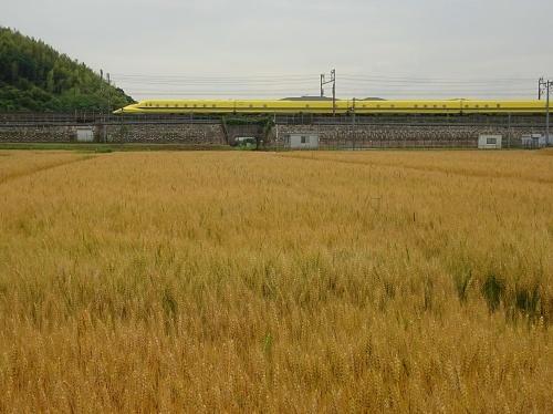 麦畑 ドクターイエロー