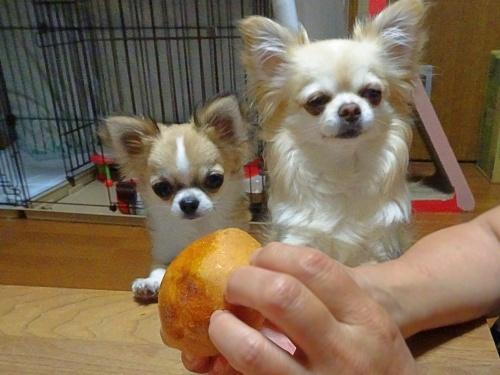 柚子 杏子 手作りパン