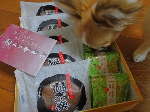 きらちろママさんからプレゼント♪ 杏子