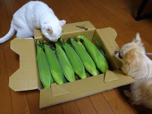 はなみずきさんからプレゼント みぞれ 柚子