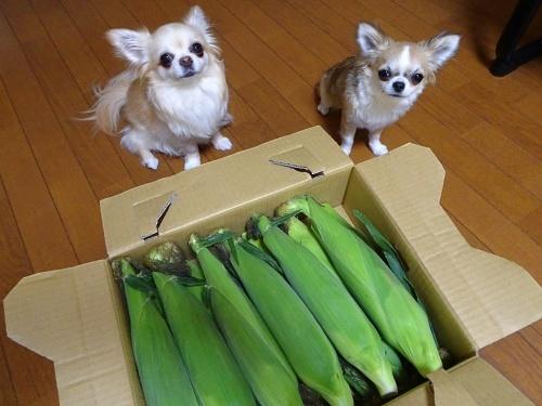 はなみずきさんからプレゼント みぞれ 柚子 杏子