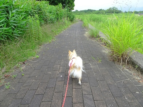 三河臨海緑地公園「日本列島」 柚子