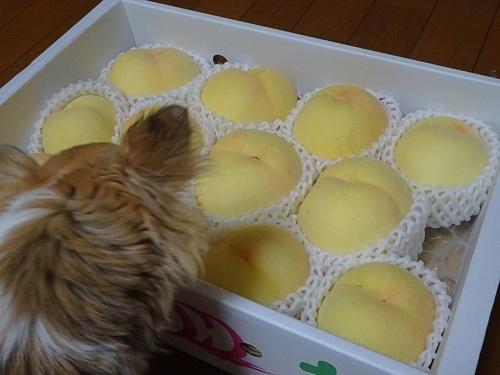 未来ママさんからプレゼント♪ 杏子