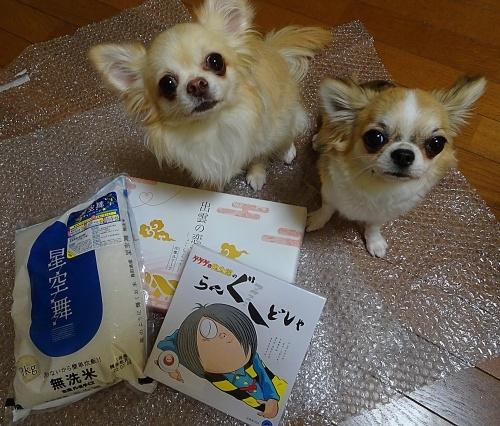 いぬのえ工房Familiaプレゼント企画 柚子 杏子