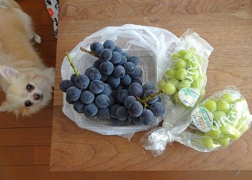 葡萄の季節 柚子