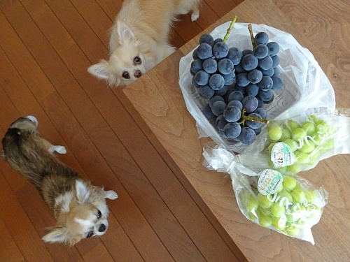 葡萄の季節 柚子 杏子