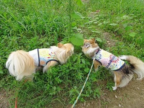 ご近所散歩 柚子 杏子