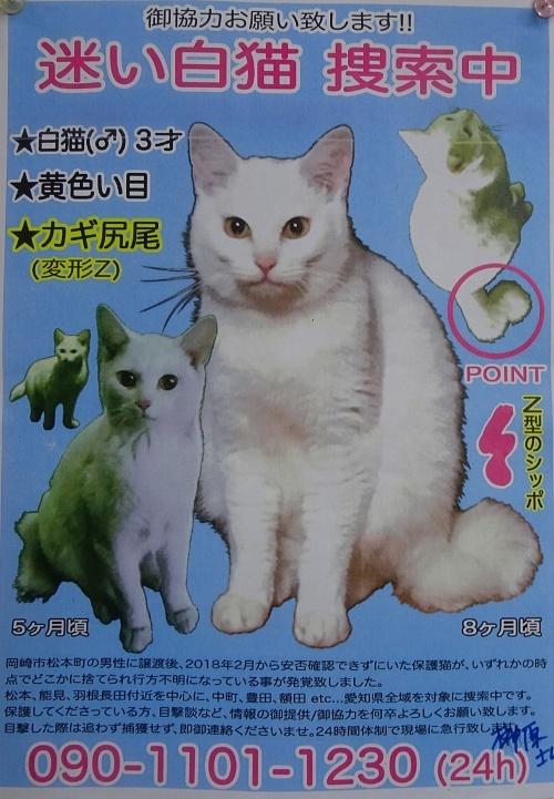 迷い白猫 捜索願い