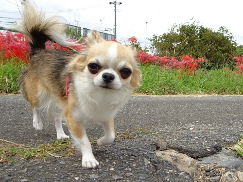 ご近所散歩♪ 杏子