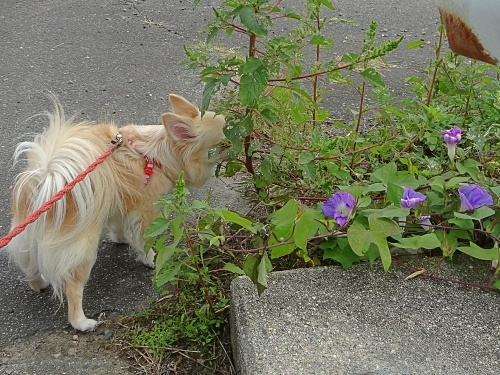 ご近所散歩♪ 柚子