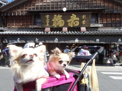10月朔日お伊勢さん参り 柚子 杏子