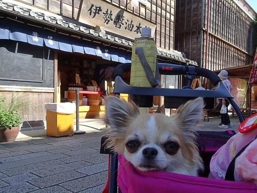 10月朔日お伊勢さん参り 杏子