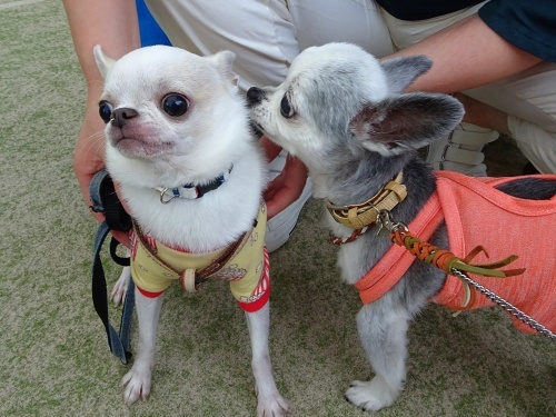 里山犬祭 おぉちゃん ぴぃ助くん
