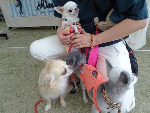 里山犬祭 おぉちゃん ぴぃ助くん 柚子