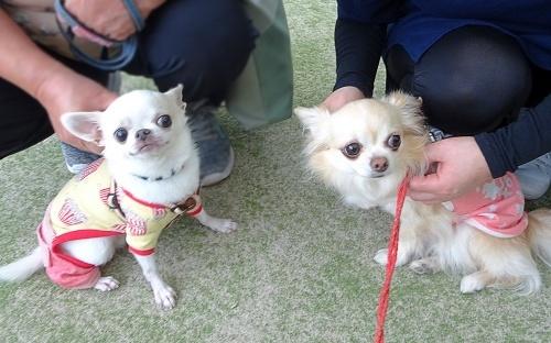 里山犬祭 おぉちゃん 柚子