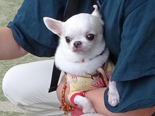 里山犬祭 おぉちゃん