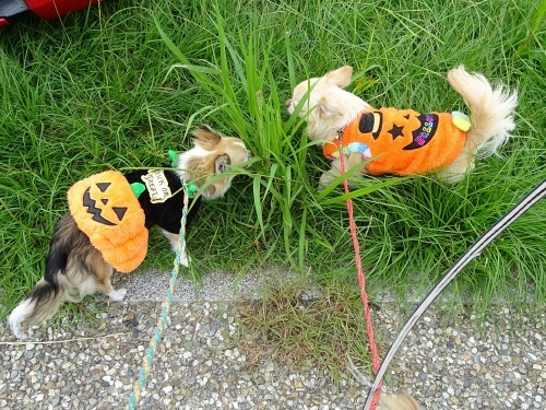 犬市場in岡崎 柚子 杏子