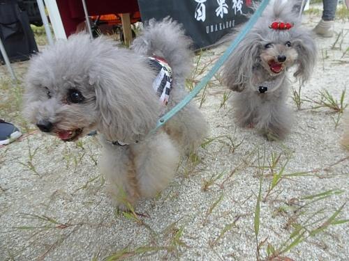 犬市場in岡崎 デビルくん エンジェルちゃん