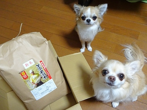 きらちろママさんからプレゼント♪ 柚子 杏子