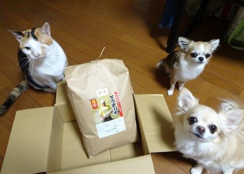 きらちろママさんからプレゼント♪ 柚子 杏子 あられ