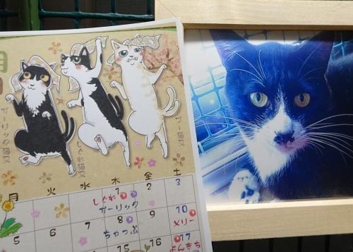 猫又カレンダー ガーリック