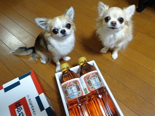 サンちゃんからプレゼント♪ 柚子 杏子