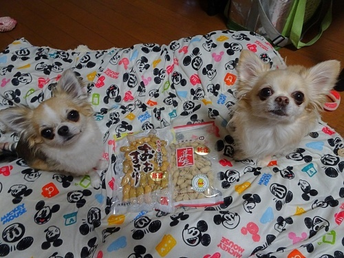 ししゅうねこさんからプレゼント♪ 柚子 杏子