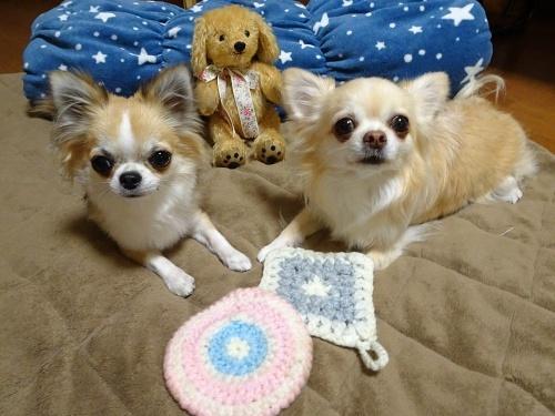 ぶらっくこーひーさんのテディわんこ♪ 柚子 杏子