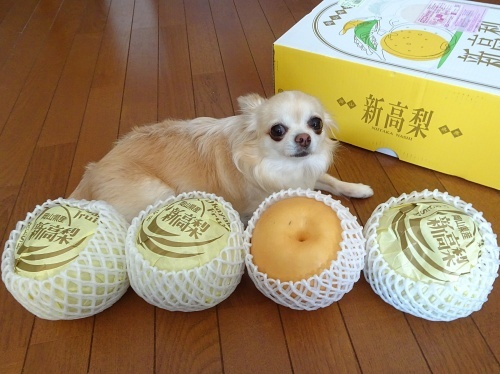 未来ママさんからプレゼント♪ 柚子