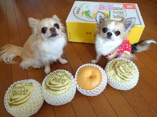 未来ママさんからプレゼント♪ 柚子 杏子