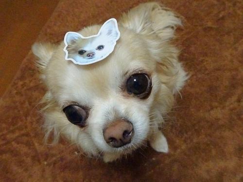 maimaiさんのプレゼント企画当選♪ 柚子