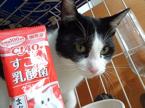 maimaiさんのプレゼント企画当選♪ しずく