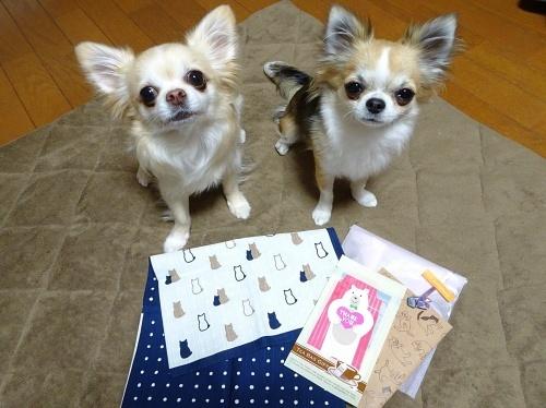 sora.nyanさんからプレゼント♪ 柚子 杏子