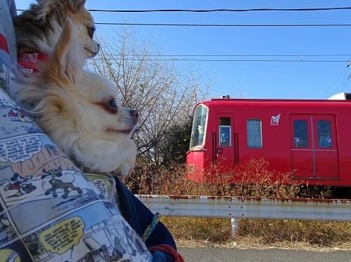 祖父江町イチョウ黄葉散歩 柚子 杏子