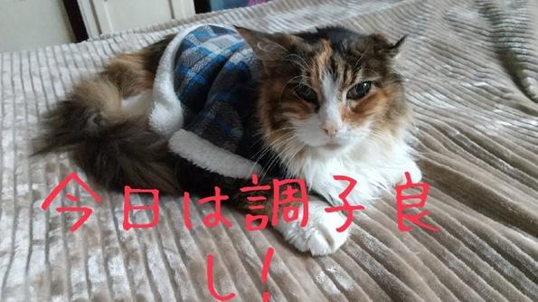 image015_R_2020100122571139a.jpg