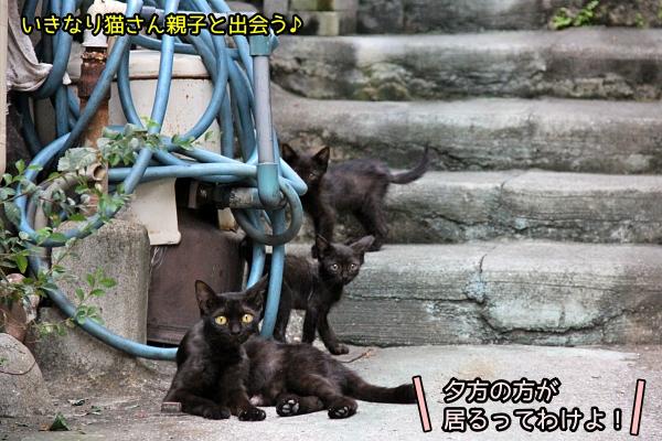 尾道 猫旅 速報