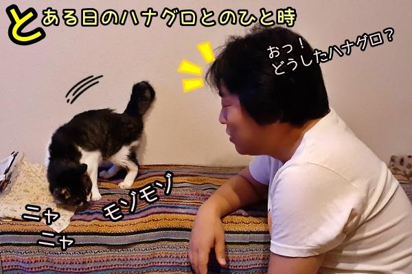 猫 おなら