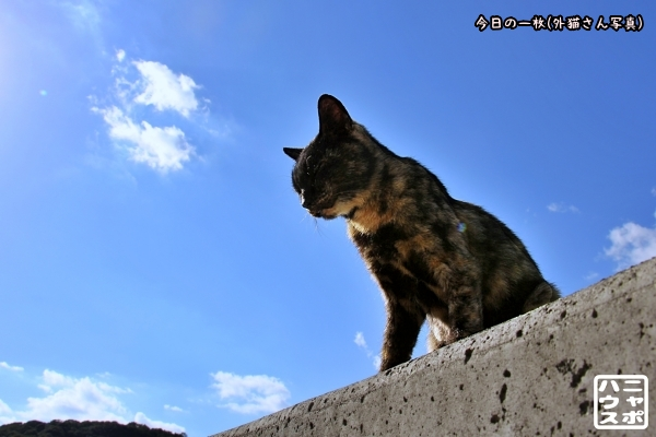 真鍋島 猫