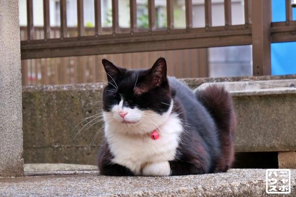 白黒猫 鈴