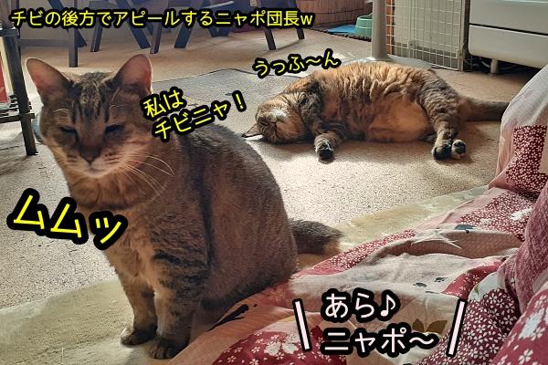 猫 甘える