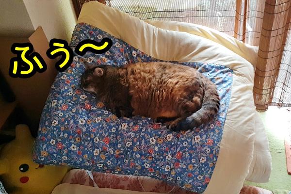デブ猫 ニャポリタン