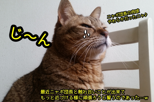 猫 ふれあい