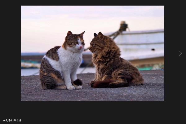 ふたり猫 みうらっぴ