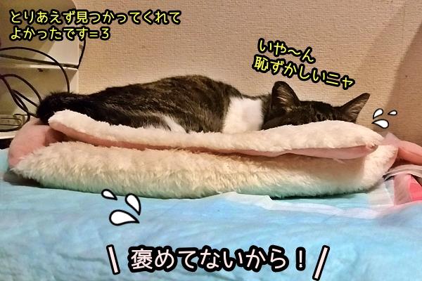ハナグロ 猫 脱走