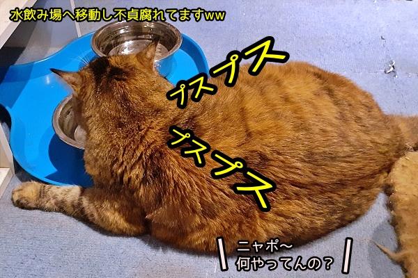 猫 ごますり
