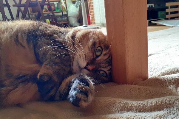 猫 おでこ スリスリ