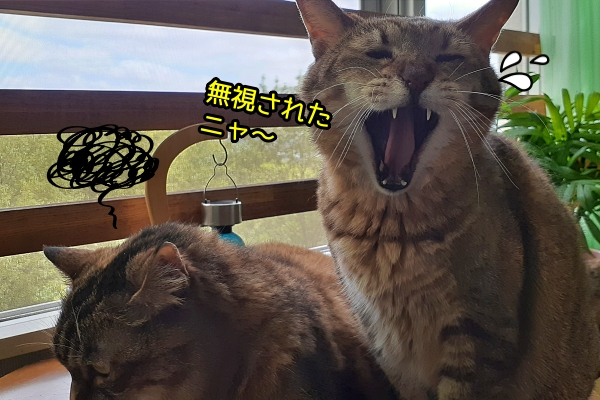 猫 昼下がり