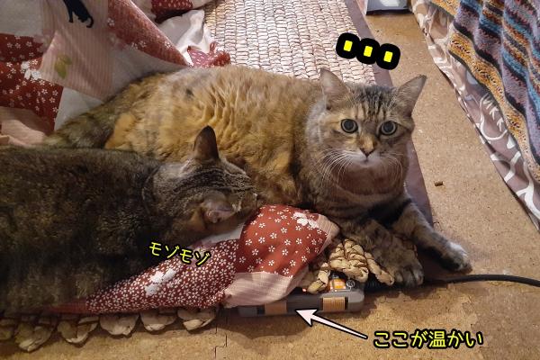 こたつ 猫